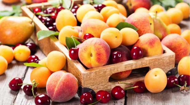 fruttaestate